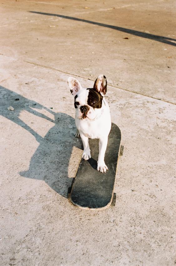 dog-on-skateboard
