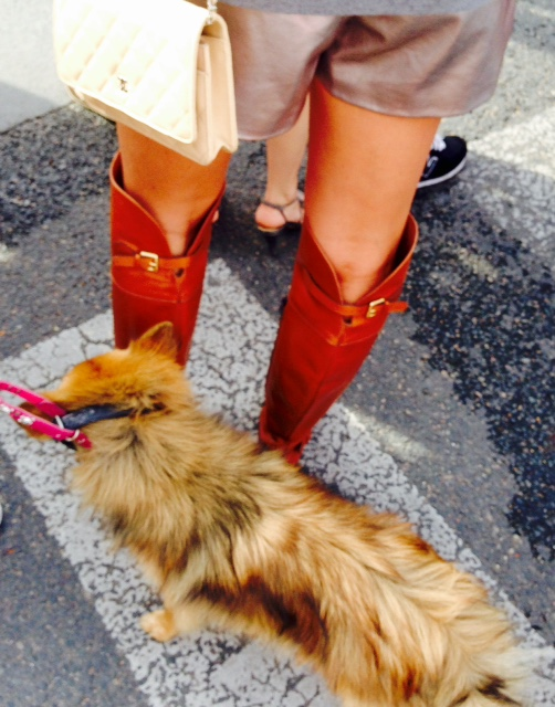 Assortir son chien à ses bottes, it's the new game of thrones.