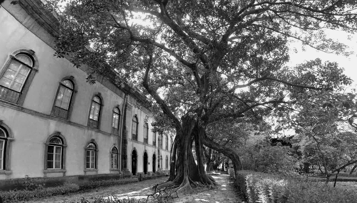 jardin-botanique-lisbonne-principe-real-lisbonne-insolite